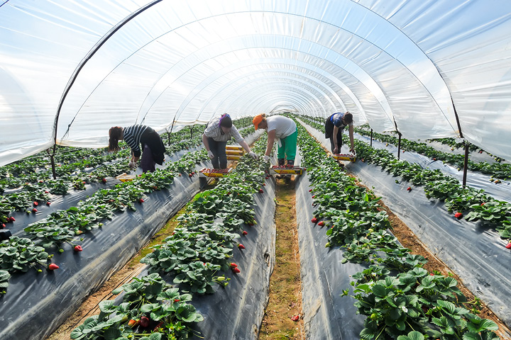 Brexit immigration and seasonal workers