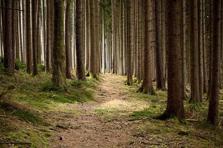 Increase in forestry demands linked to environmental and social benefits