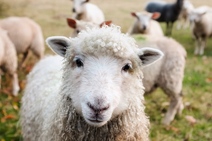 What farmers and landowners should know about livestock worrying